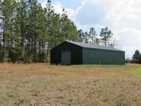 Long Leaf Timber : Ponce De Leon : Holmes County : Florida