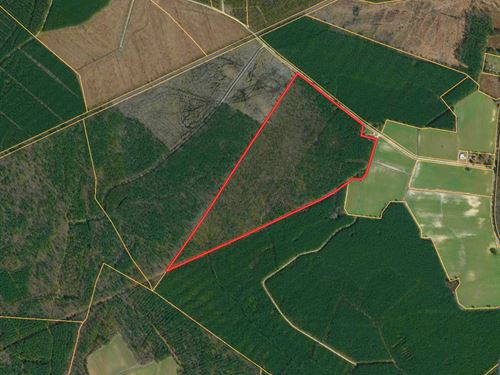 Aulander, Nc Timber / Hunting Tract : Aulander : Bertie County : North Carolina