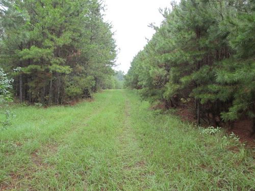 Rural Undeveloped Acreage Palestine : Palestine : Anderson County : Texas