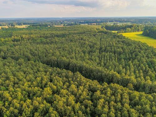Timberland Auction, 378 Acres 11 : Dutton : Jackson County : Alabama