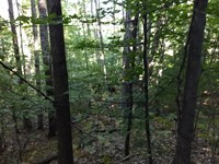Let's Go Huntin' : Kaleva : Manistee County : Michigan
