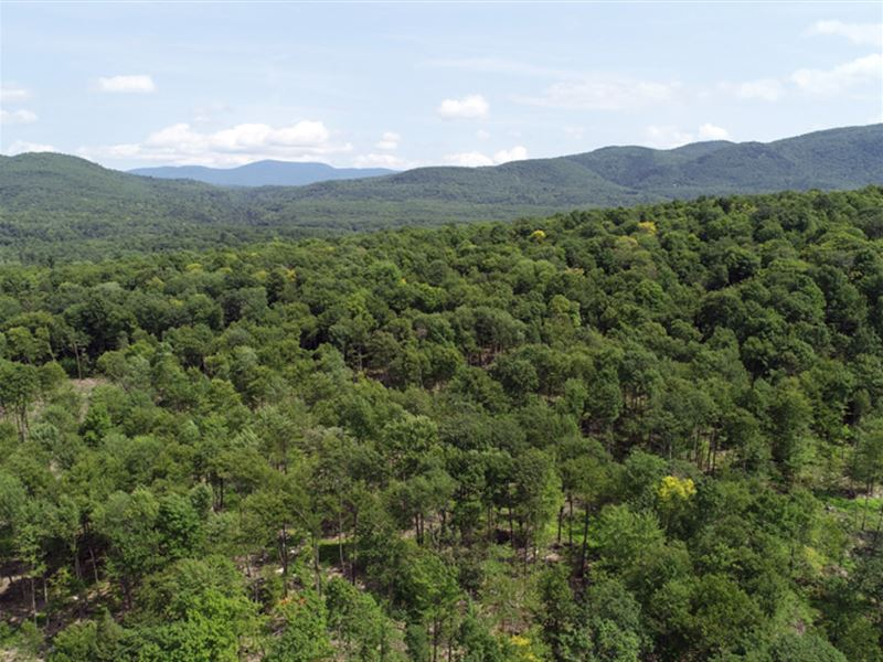 East Middlebury Forest : Middlebury : Addison County : Vermont