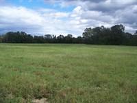 104 Acre Farm Taylor County, Ga : Reynolds : Taylor County : Georgia