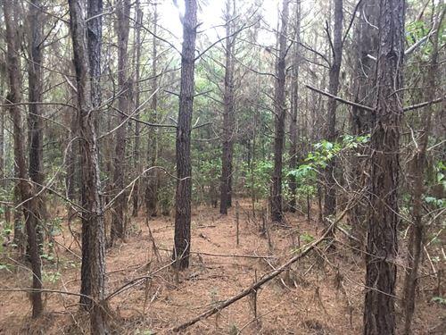 Ouachita County Planted Pine Land : Chidester : Ouachita County : Arkansas