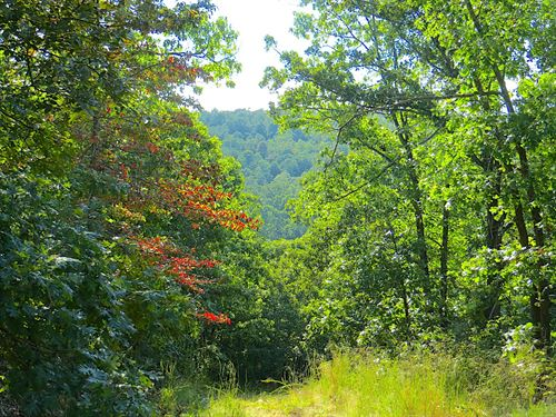 Timbered Hunting Acreage : Mammoth Spring : Fulton County : Arkansas