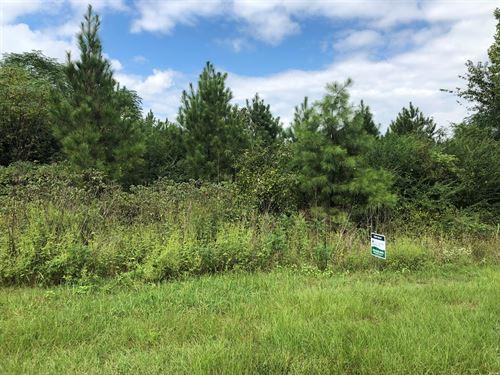 Young Planted Pine Hardwood : Prescott : Nevada County : Arkansas