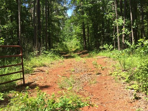 East Texas Hunting Land : Mount Enterprise : Rusk County : Texas