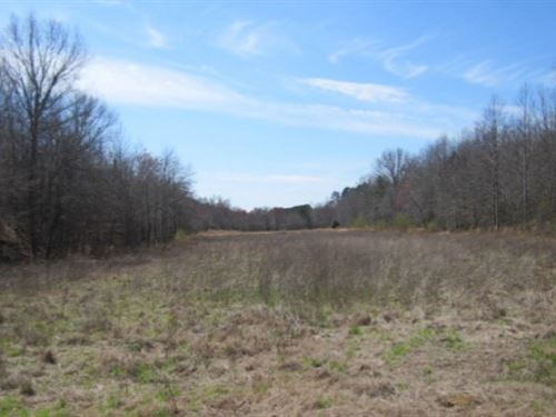 38.7 Acres In Prentiss County, Ms : Booneville : Prentiss County : Mississippi