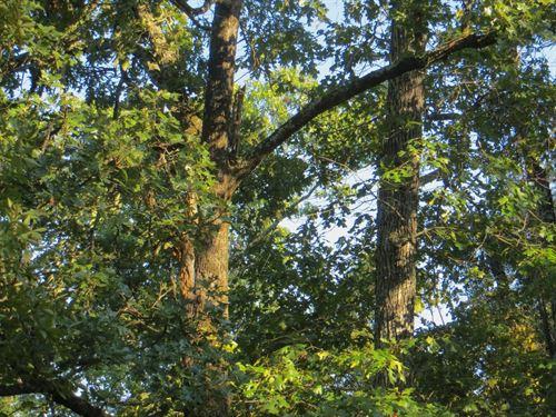 Land For Sale in Arkansas : Mammoth Spring : Fulton County : Arkansas