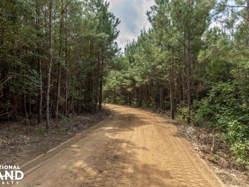 Private Lake And National Forest : Ovett : Jones County : Mississippi