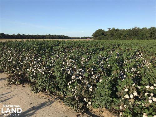 Ivy Farm Irrigated : Lambert : Quitman County : Mississippi