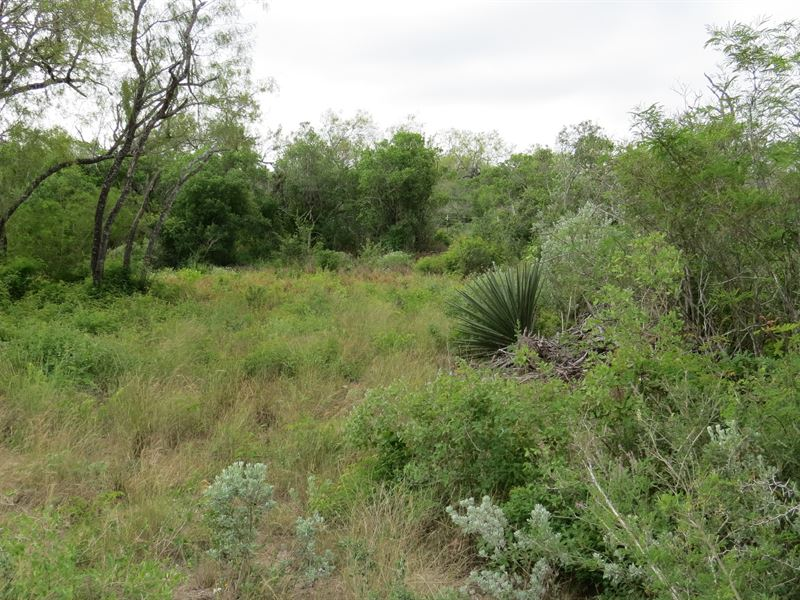 Duval County, Hunting/Recreational : San Diego : Duval County : Texas