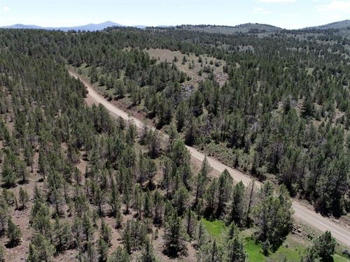 20 Acres In Madeline, CA : Madeline : Lassen County : California