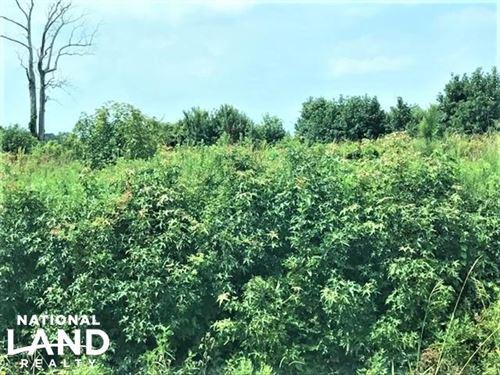 Hyde 54 Acres : Scranton : Lenoir County : North Carolina
