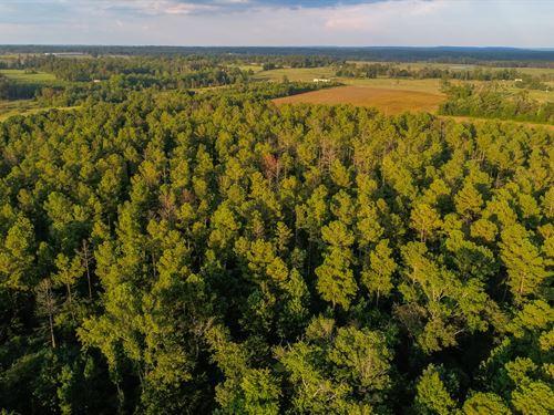 Live Timberland Auction-0378 Acres : Dutton : Jackson County : Alabama
