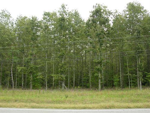 Timberland Auction 378 Acres 6 11 : Dutton : Jefferson County : Alabama