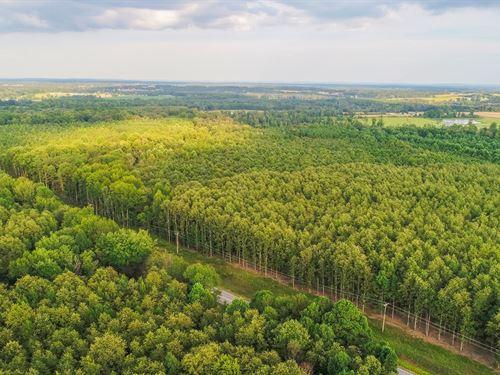Timberland Auction 378 Acres 10 11 : Dutton : Jackson County : Alabama