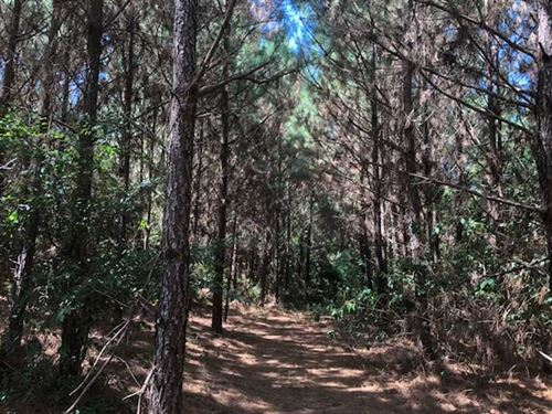 18 Acres of Trees With a Creek : Nacogdoches : Texas