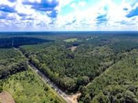 Timber, Hardwoods, Planted Pines : Little Texas : Macon County : Alabama