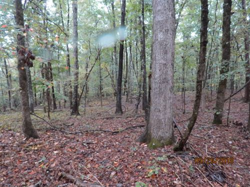 Cheap Hunting Land Ready To Hunt : Windham Springs : Tuscaloosa County : Alabama
