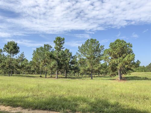96 Ac Timber Rd 14 : Woodville : Tyler County : Texas