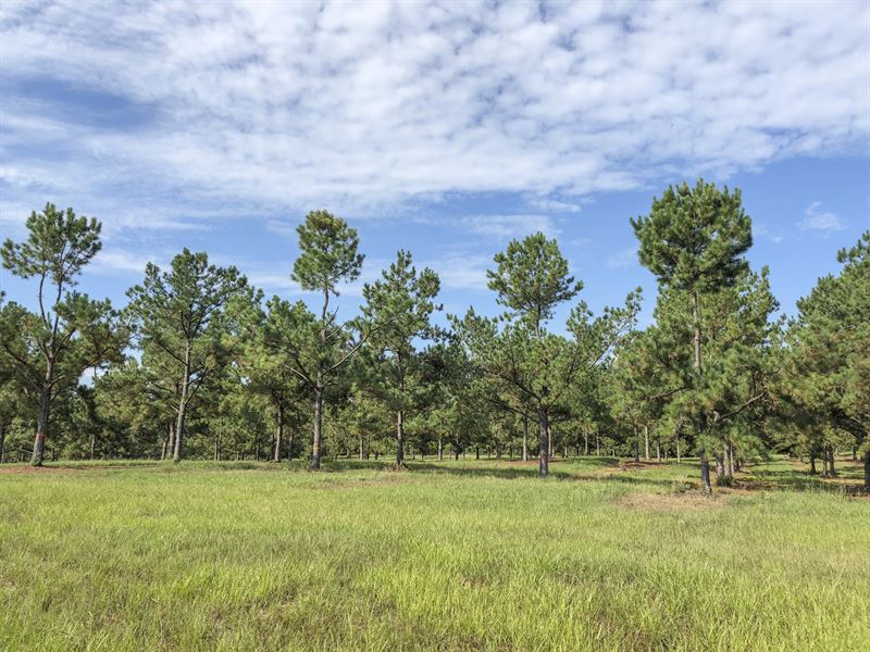 102 Ac Timber Rd 14 : Woodville : Tyler County : Texas