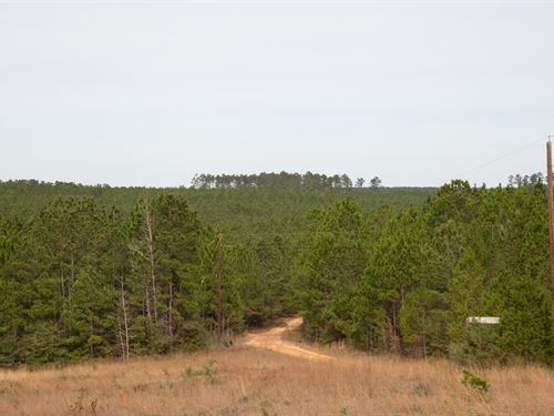 160 Ac Timber Rd 14 : Woodville : Tyler County : Texas