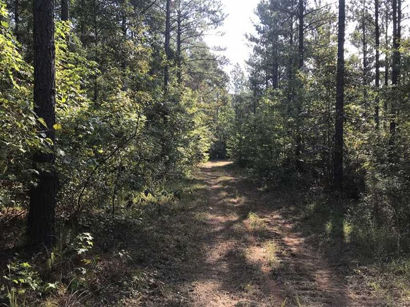 261 Acres in Pickens Co, AL : Ethelsville : Pickens County : Alabama