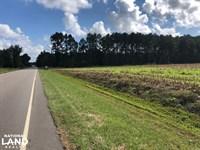Ridgeville 35 Acres : Ridgeville : Berkeley County : South Carolina
