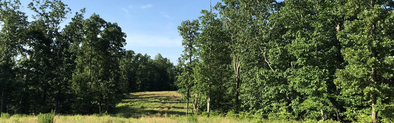 190+/- Acres Benton County Tn Land : Holladay : Benton County : Tennessee