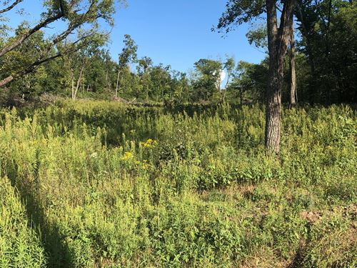 237 Acres Texas County : Elk Creek : Texas County : Missouri
