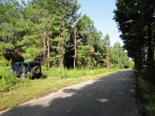 Hunting Land Timber Land Lawrence : Jayess : Lawrence County : Mississippi
