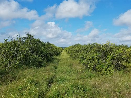 Frostproof 110 Acre Grove : Frostproof : Polk County : Florida