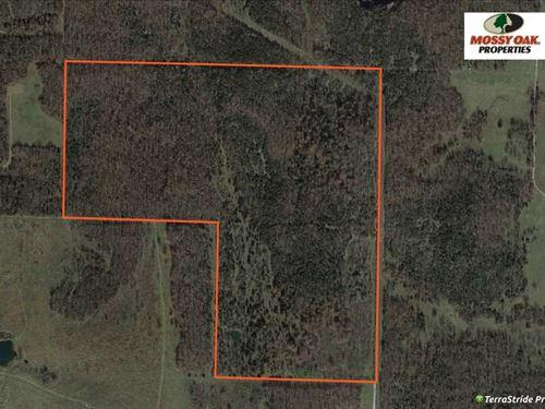 Timber Tract in Ash Grove, Missouri : Ash Grove : Greene County : Missouri