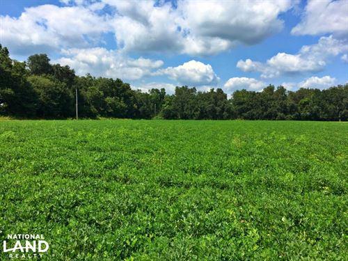 Baldwin County Mini Farm : Summerdale : Baldwin County : Alabama