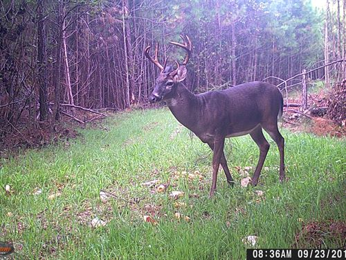 42.57 Acres Clinton, Laurens County : Clinton : Laurens County : South Carolina