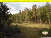 Large Parcel, Two Clearings Nf : Birch Tree : Shannon County : Missouri