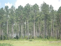 Poarch Creek Tract : Atmore : Escambia County : Alabama