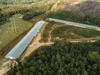 2 House Poultry Mega Farm, E Al : Woodland : Randolph County : Alabama