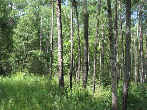 Escambia 69 : Brewton : Escambia County : Alabama
