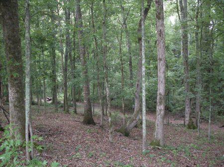 Fenced Land : Sharpsburg : Coweta County : Georgia