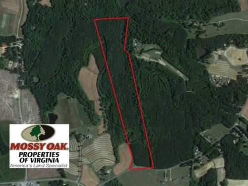 40 Acres of Hunting And Timber Lan : Halifax : Virginia