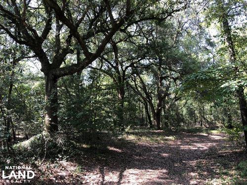 North Hunting / Rec / Timber Estate : North : Orangeburg County : South Carolina