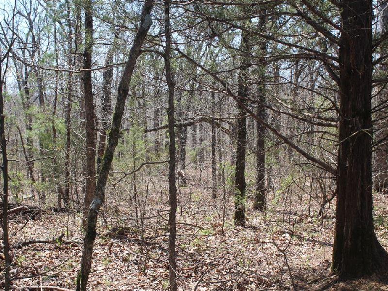 80 Acres Power, Water, & Septic : Mountain View : Stone County : Arkansas