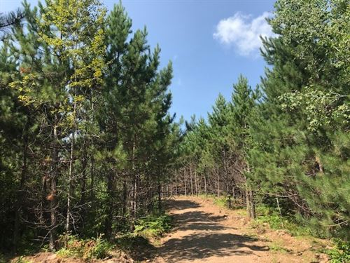 80 Acres Cloquet Valley Forest : Two Harbors : Saint Louis County : Minnesota