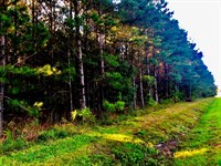 Timberland Property Washington Nc : Washington : Beaufort County : North Carolina
