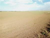 157 Acres Cropland : Medford : Oklahoma County : Oklahoma