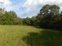 Farm Tn Fencing, Timber, Horses : Adamsville : Hardin County : Tennessee