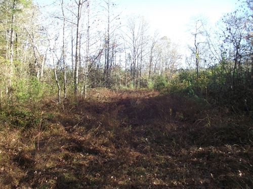 Hunting Land Tennessee Timber : Bethel Springs : McNairy County : Tennessee