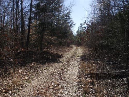 Lg Acreage Hunting Land Tennessee : Saltillo : Hardeman County : Tennessee